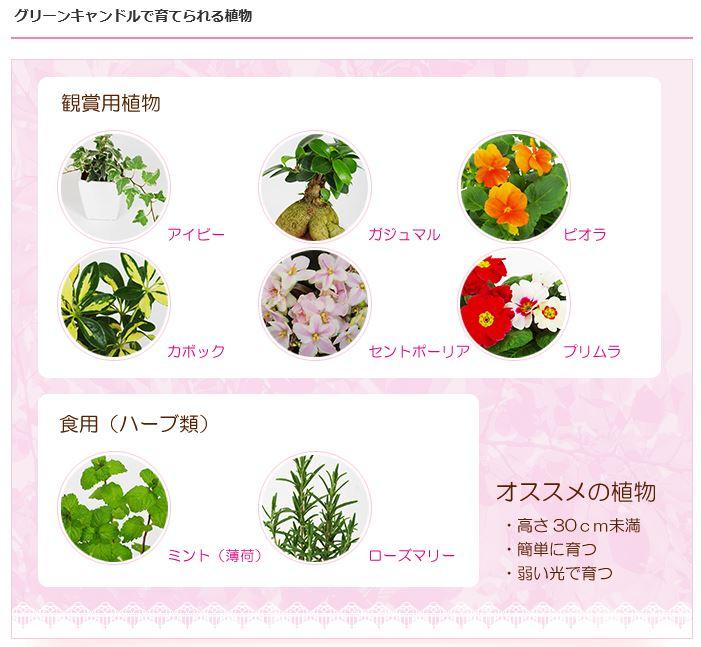 ニッチで観葉植物、種類